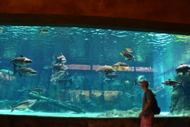 <h5>Dierentuin Singapore Aquarium</h5>
